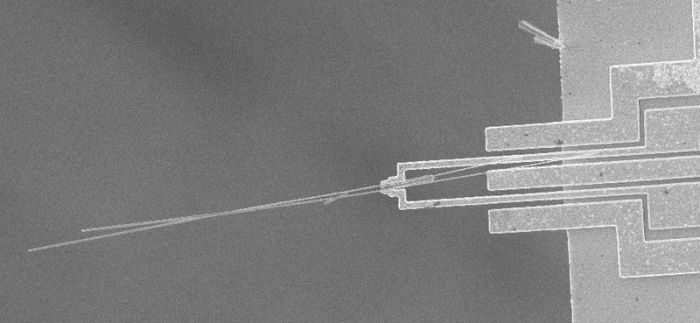 Nanowire sample by Erik Bakkers; SEM image by Kristian Mølhave; Microgripper på MIC (Creative Commons Attribution 2.5 Generic)