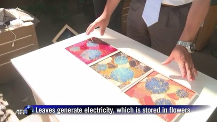 "Screenshot from the AFP video report on Japan's ""hydrangea solar cell"" [fair use]"