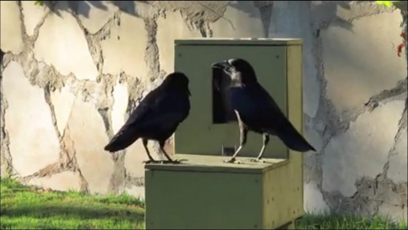 crows vending machine
