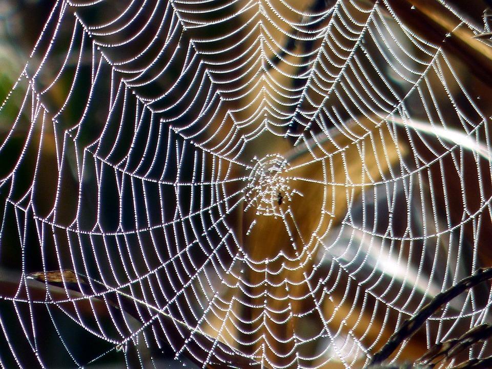 Canvas Spider