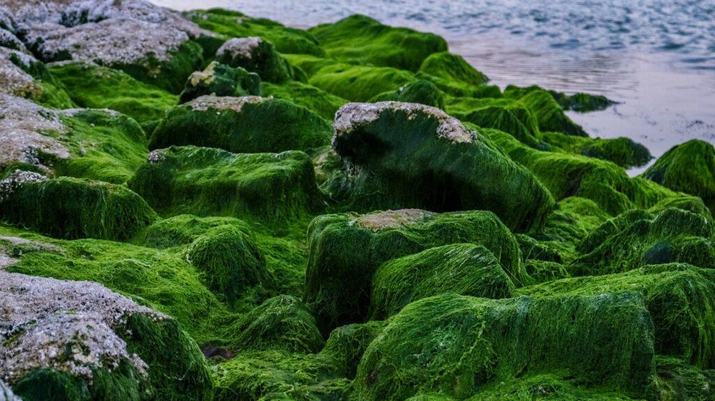 algae help